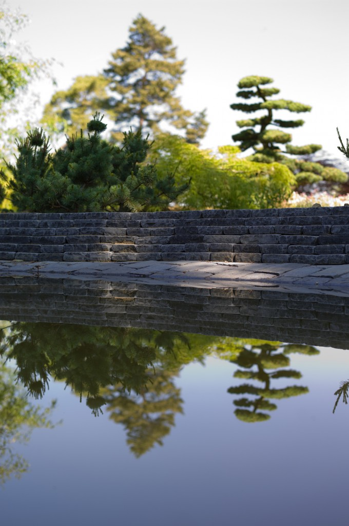 reflet d'un pinus parviflora en nuages